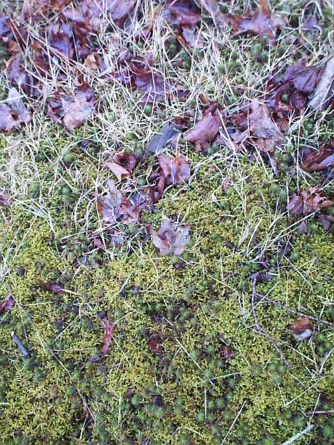 Close up of a grass to moss transition.